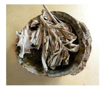 abaloneshellandsage